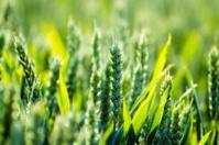 Agricultures mondiales : le déplacement de la puissance ?