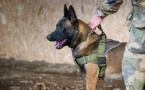 Un chien des commandos marines décoré à titre posthume au Royaume-Uni